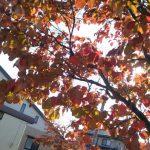 10月24日 紅葉始まる?
